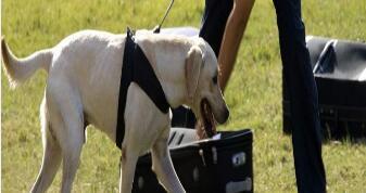 搜毒犬-莱芜保安服务服务